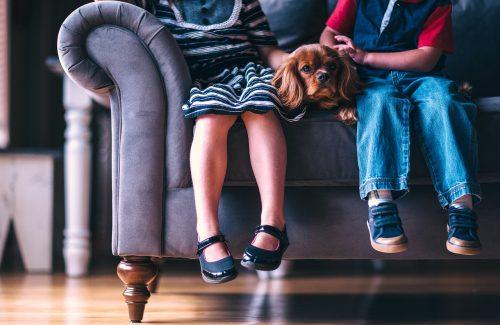 C mo limpiar las tapicer as del sof sillas o coche - Como limpiar tapiceria sillas ...